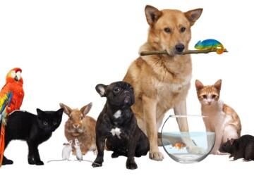 Домашние животные — интересные факты