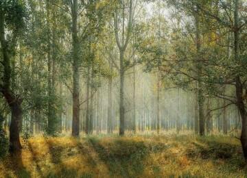 Какие бывают леса