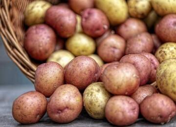 Откуда к нам пришёл картофель
