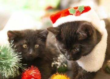 Праздник у кошек