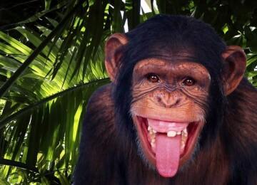 Обезьяны и другие приматы