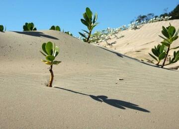 Что растёт в пустыне