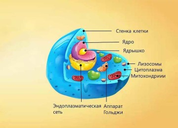 Какие бывают клетки