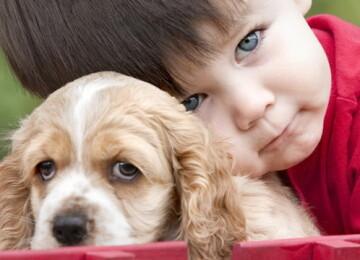 Дикие и домашние животные: их значение в развитии ребёнка