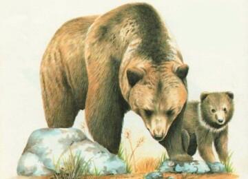 Красивые картинки животных для детей нарисованные цветные (36 фото)