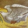 Голубь — описание, виды и особенности жизни птицы