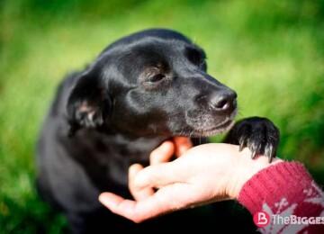 Топ 20 самых милых собак в мире с фото