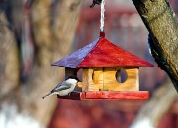 Синица фото и описание птицы для детей