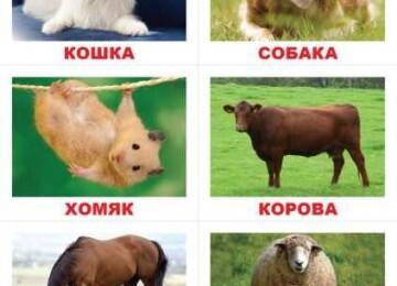 Домашние животные для детей: Какого питомца купить малышу?