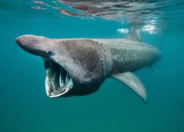 Морские обитатели: фото с названиями и интересные факты о них