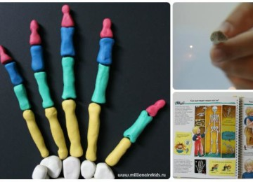 Скелет человека: все о костях детям