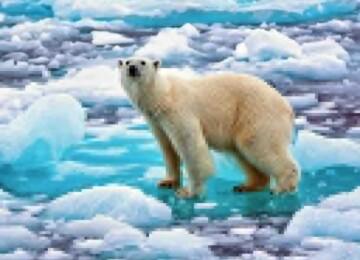 Живущие во льдах