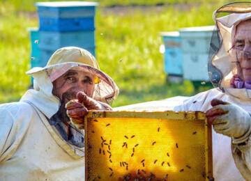 Профессия пчеловод, или пасечник