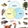 Дикие животные. Безопасное поведение с животными