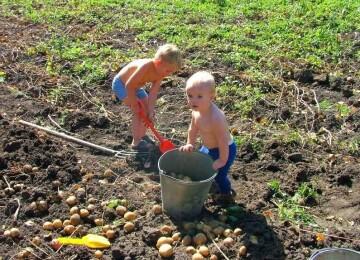 Секреты трудового воспитания детей дошкольного возраста