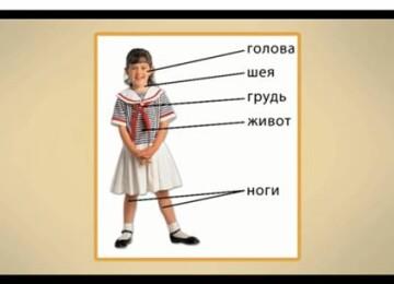Тело человека. Энциклопедия для детей младшего школьного возраста