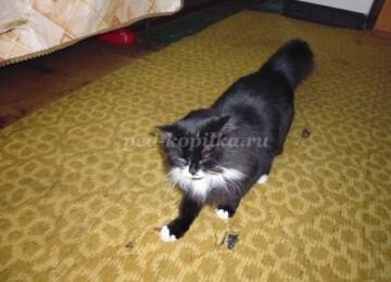 Доклад Домашнее животное Кошка сообщение (описание для детей)