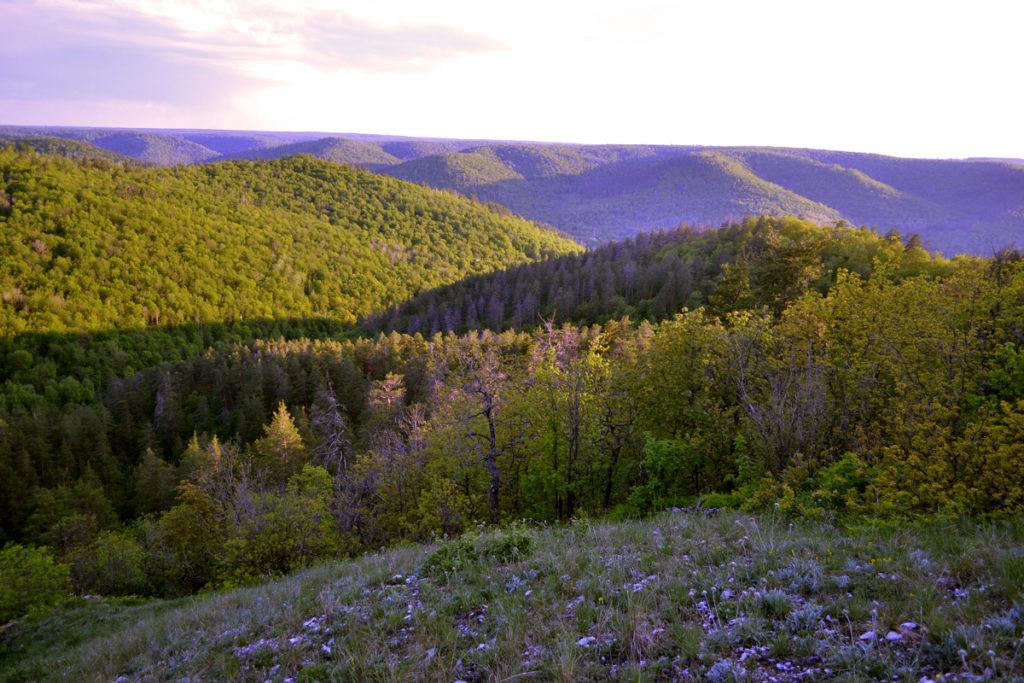 11_vyshka_botanichka-24.jpg