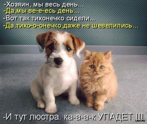 128e1fe27c8f27331037f63de7aa8898-php.jpg