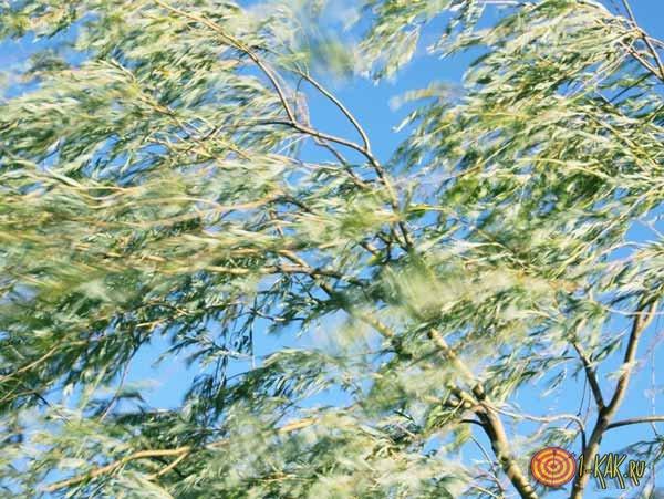 1459030615_otkuda-beretsya-veter-6.jpg