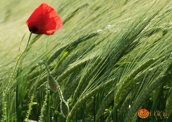 1459030650_otkuda-beretsya-veter-1.jpg
