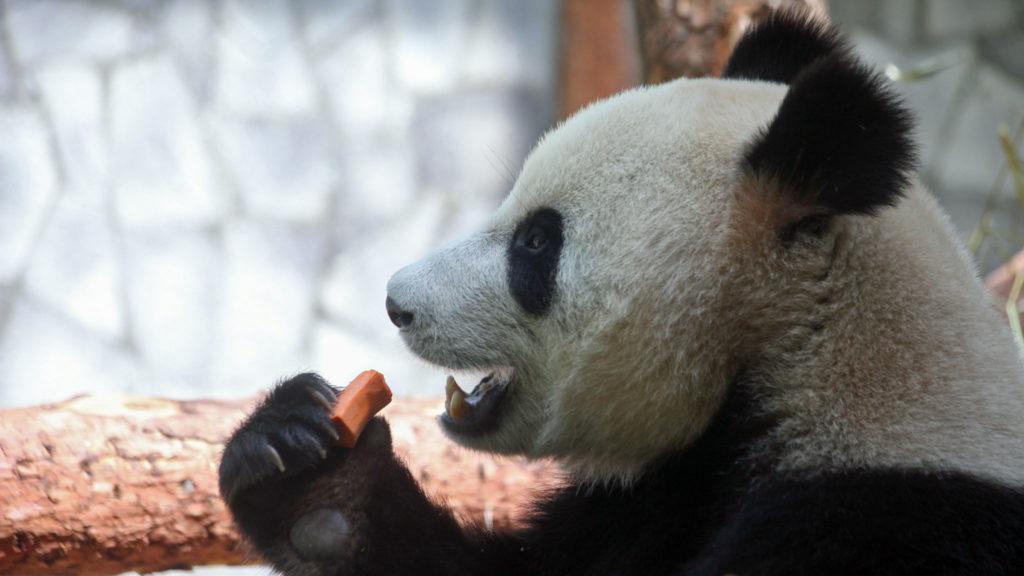 2048-panda.jpg