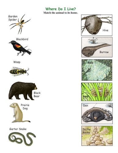 animals_and_their_homes_2-386x500.jpg