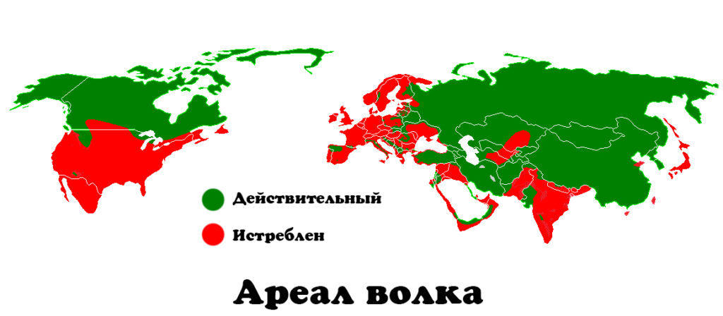 areal-1-1024x448.jpg