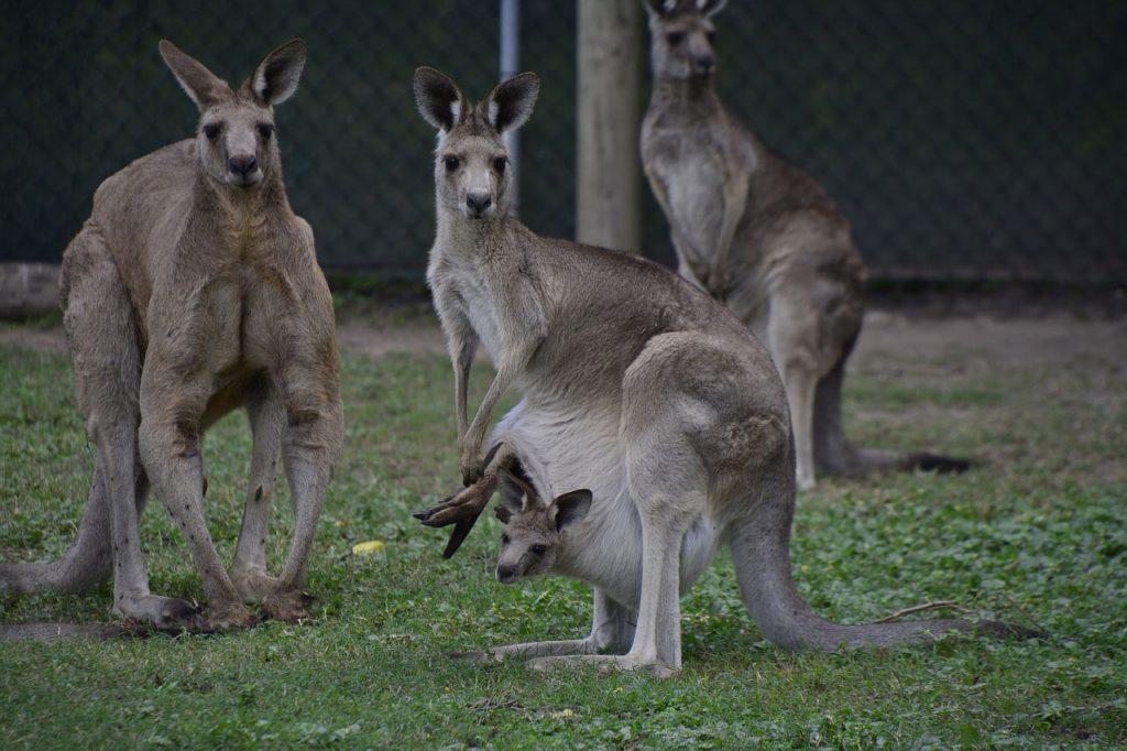 australia36-1024x682.jpg