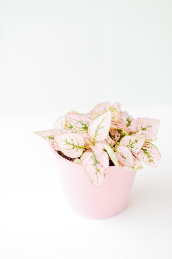 -бледно-розовая.jpg