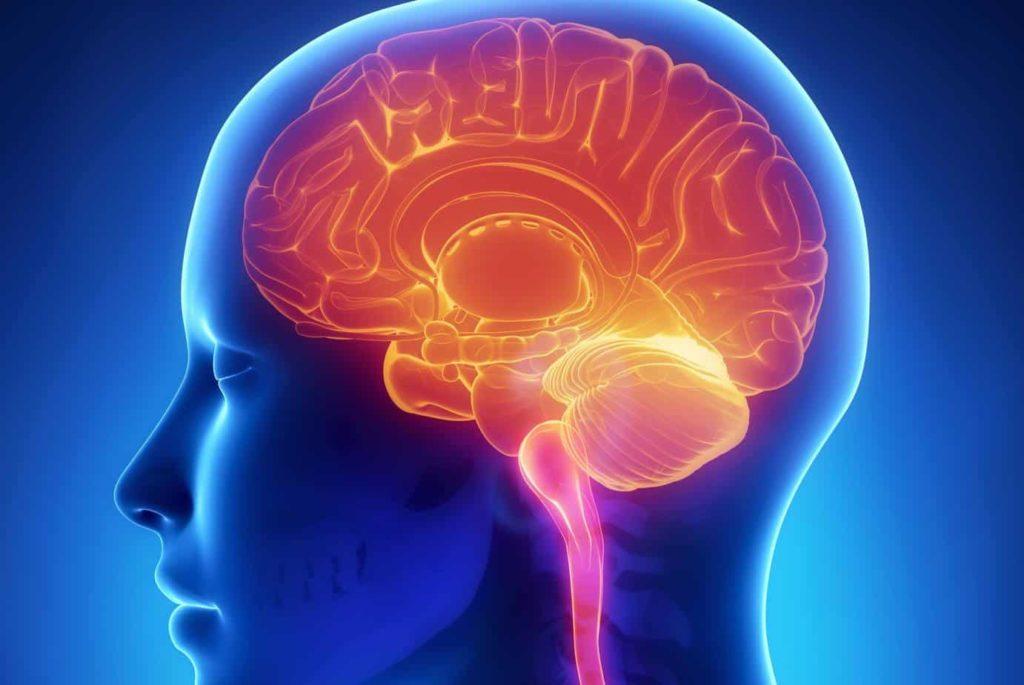 brain-function.jpg