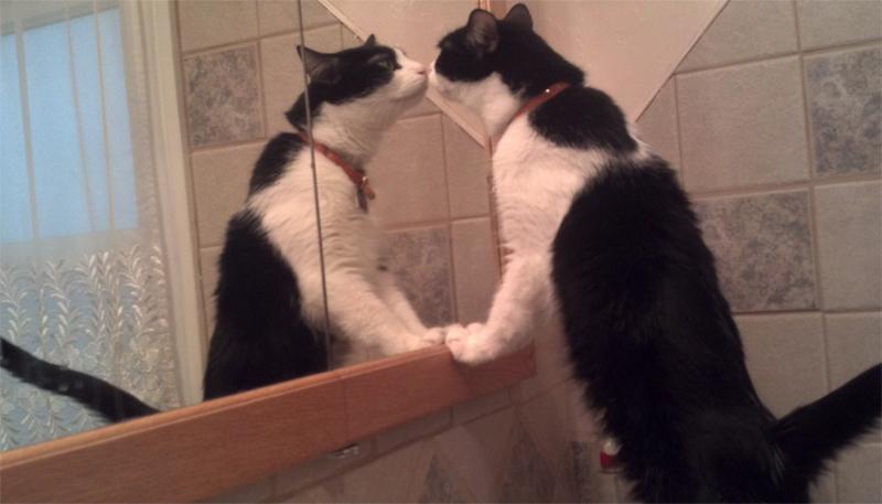 cat556.jpg