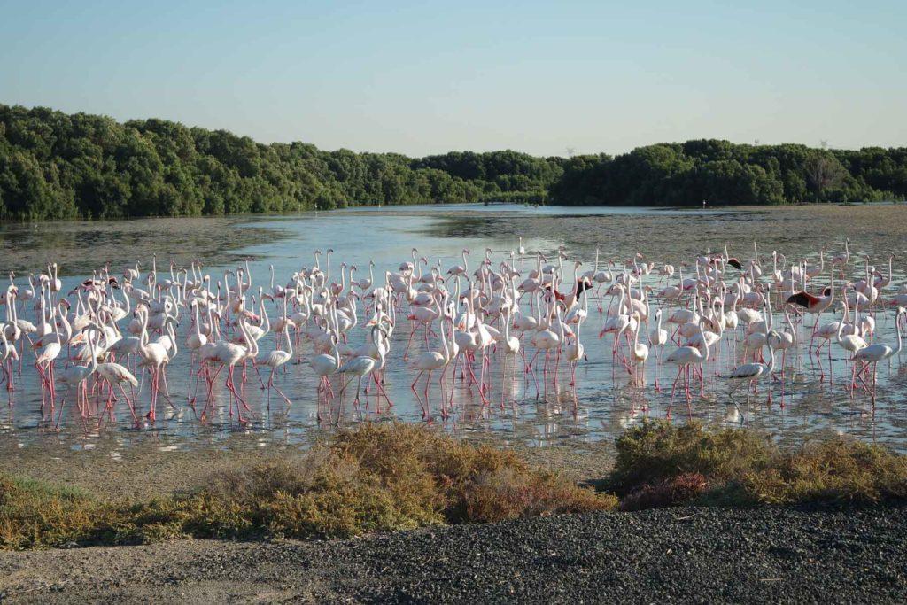 chem_pitaetsya_flamingo.jpg