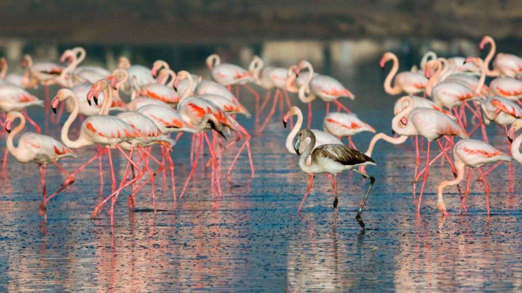 chem_pitautsya_flamingo.jpg