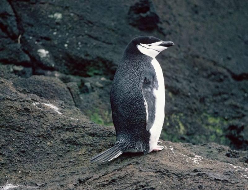 detyam-o-pingvinah_5.jpg
