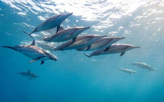 dlinnonosiy-delfin-544x340.jpg