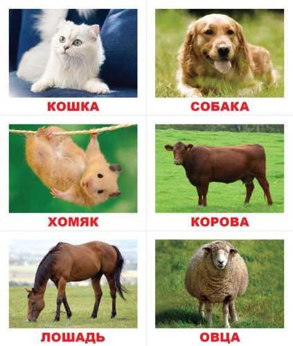 domashnie_zhivotnye_vunderkind_s_pelenok_3-423x500.jpg