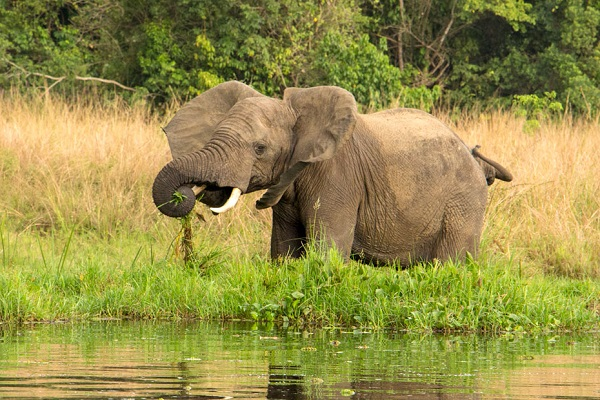 elephant-on-the-bank-of-the-Nile.jpg