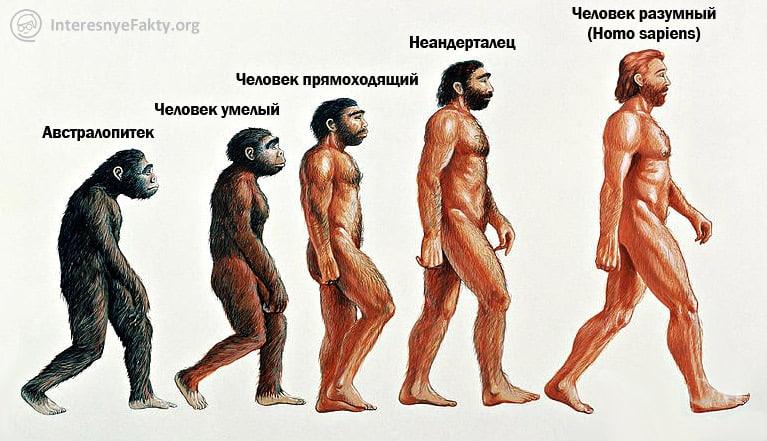 E`volyutsiya-cheloveka.jpg