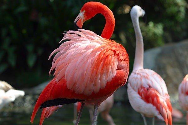 flamingo41-e1398012028334.jpg