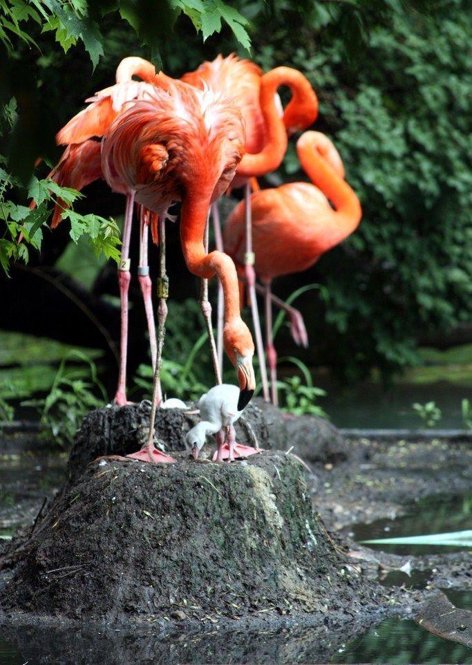flamingo_1_1.jpg
