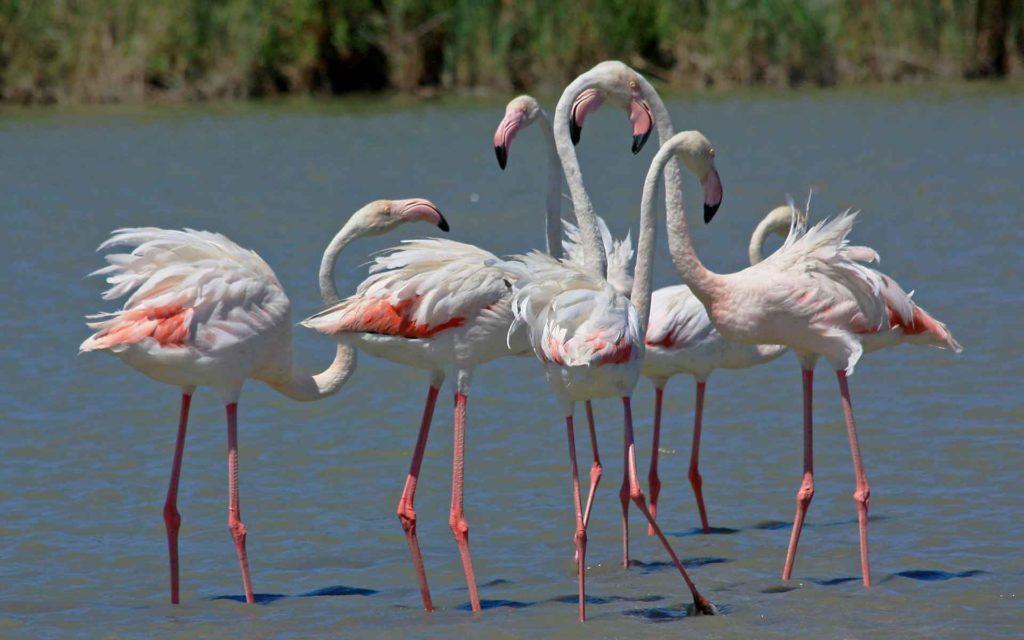 flamingo_foto_ptici.jpg