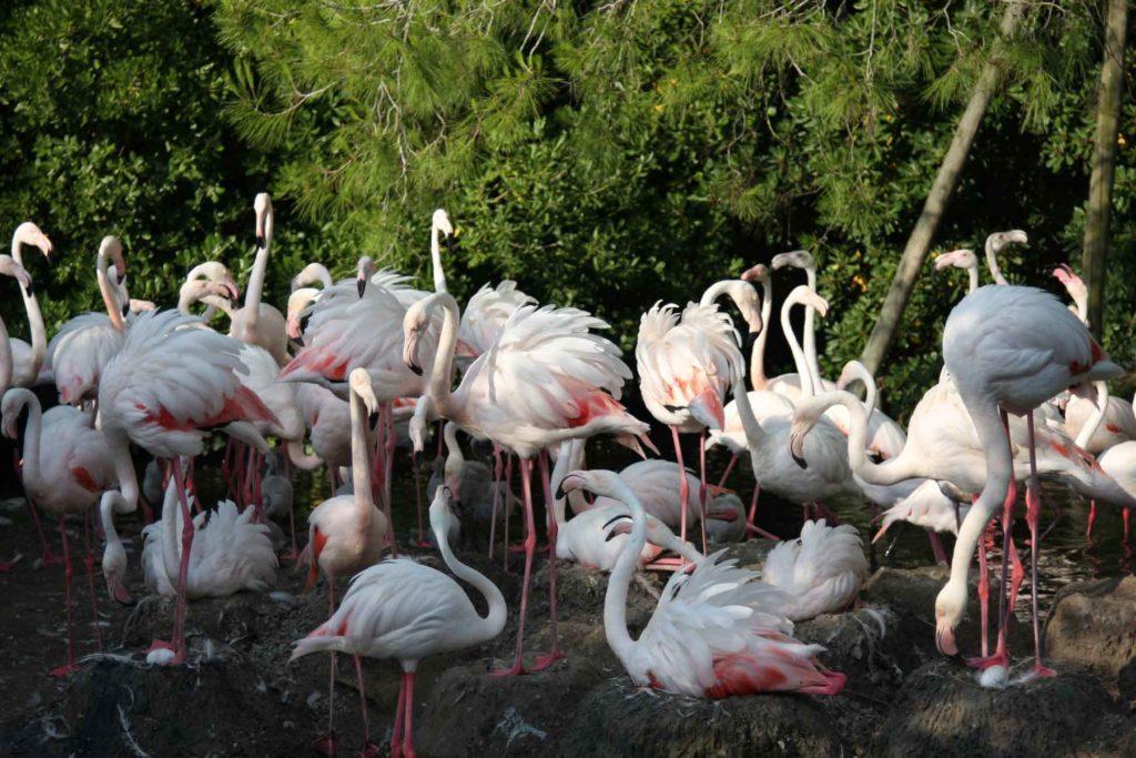 flamingo_gnezdo.jpg