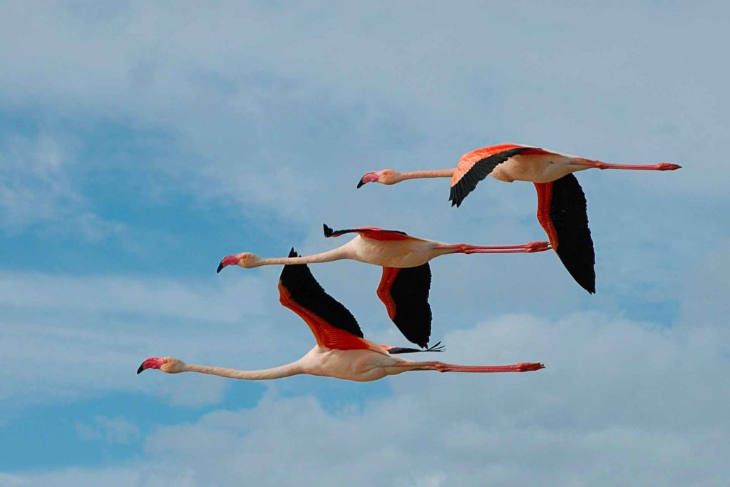 flamingo_jivut_stayami.jpg