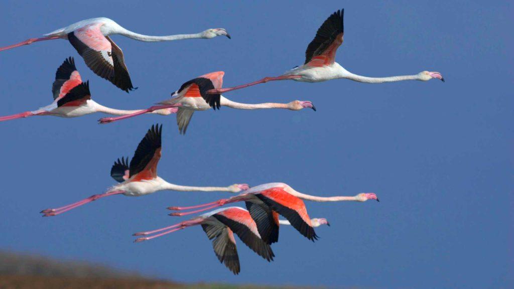 flamingo_letyat.jpg