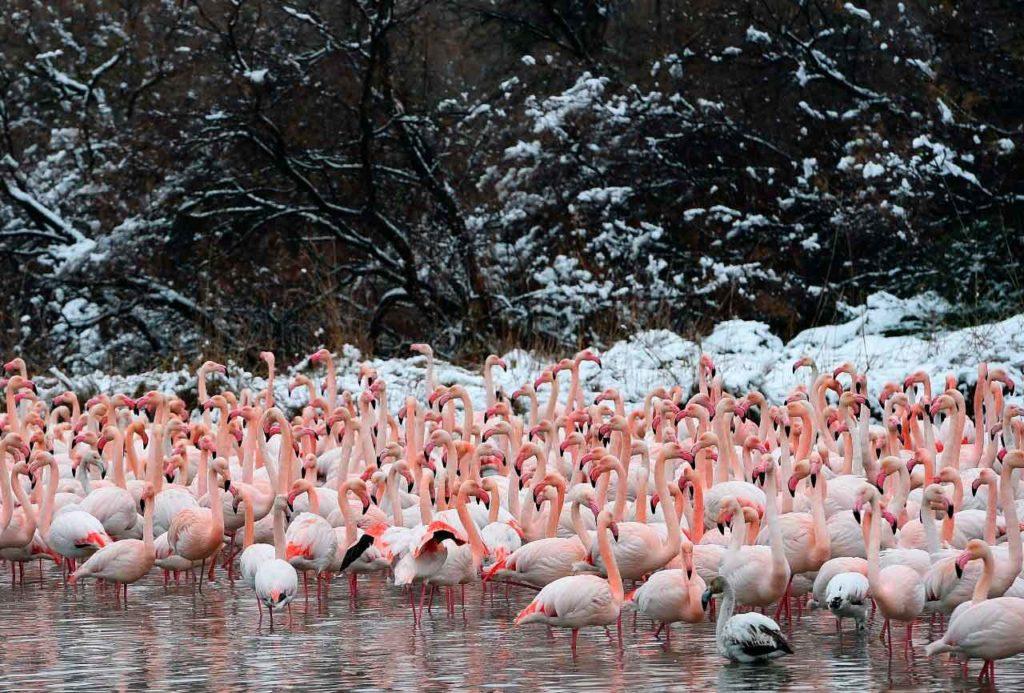 flamingo_obiknovenniy.jpg