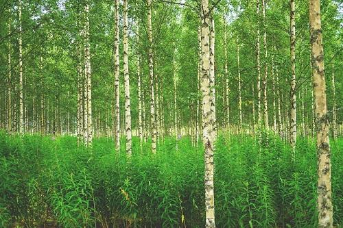 forest-896251_960_720.jpg