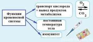 funkcii-krovenosnoj-sistemy-300x137.jpg