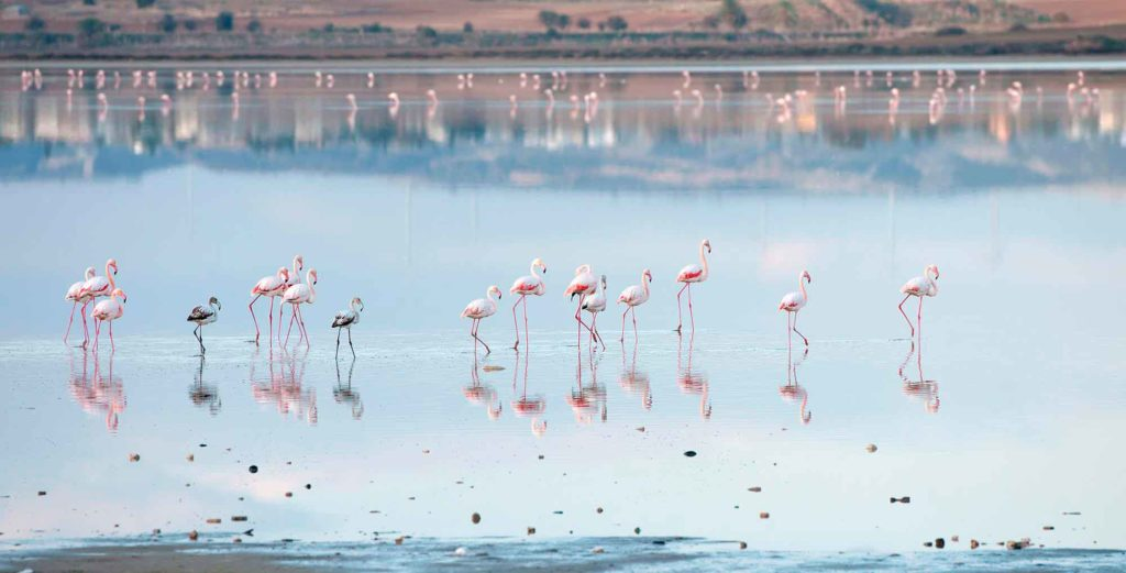 gde_jivut_flamingo.jpg