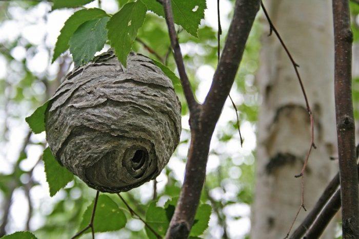 -гнездо-700x467.jpg